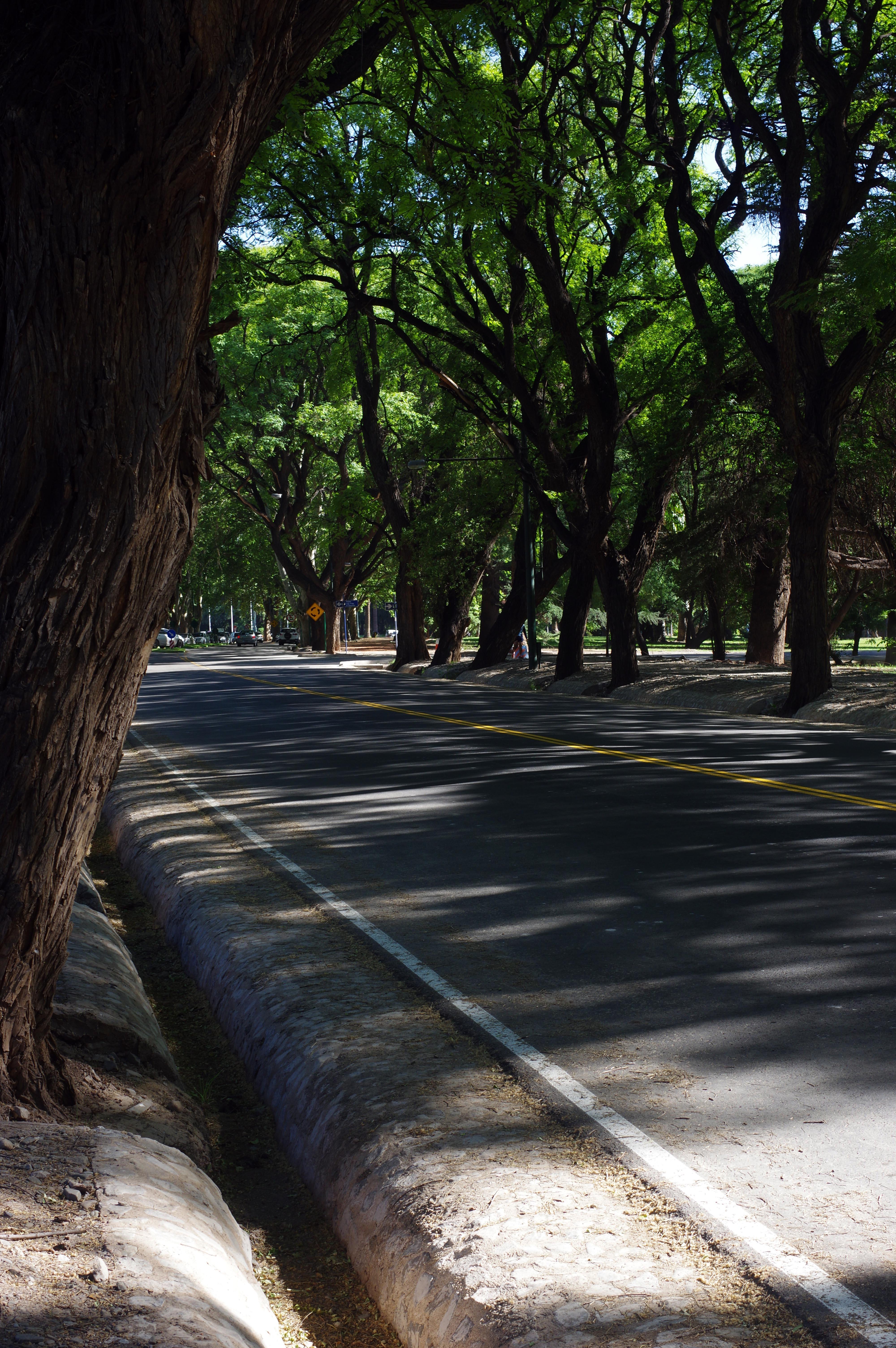 171226_Mendoza-CerroGloria60