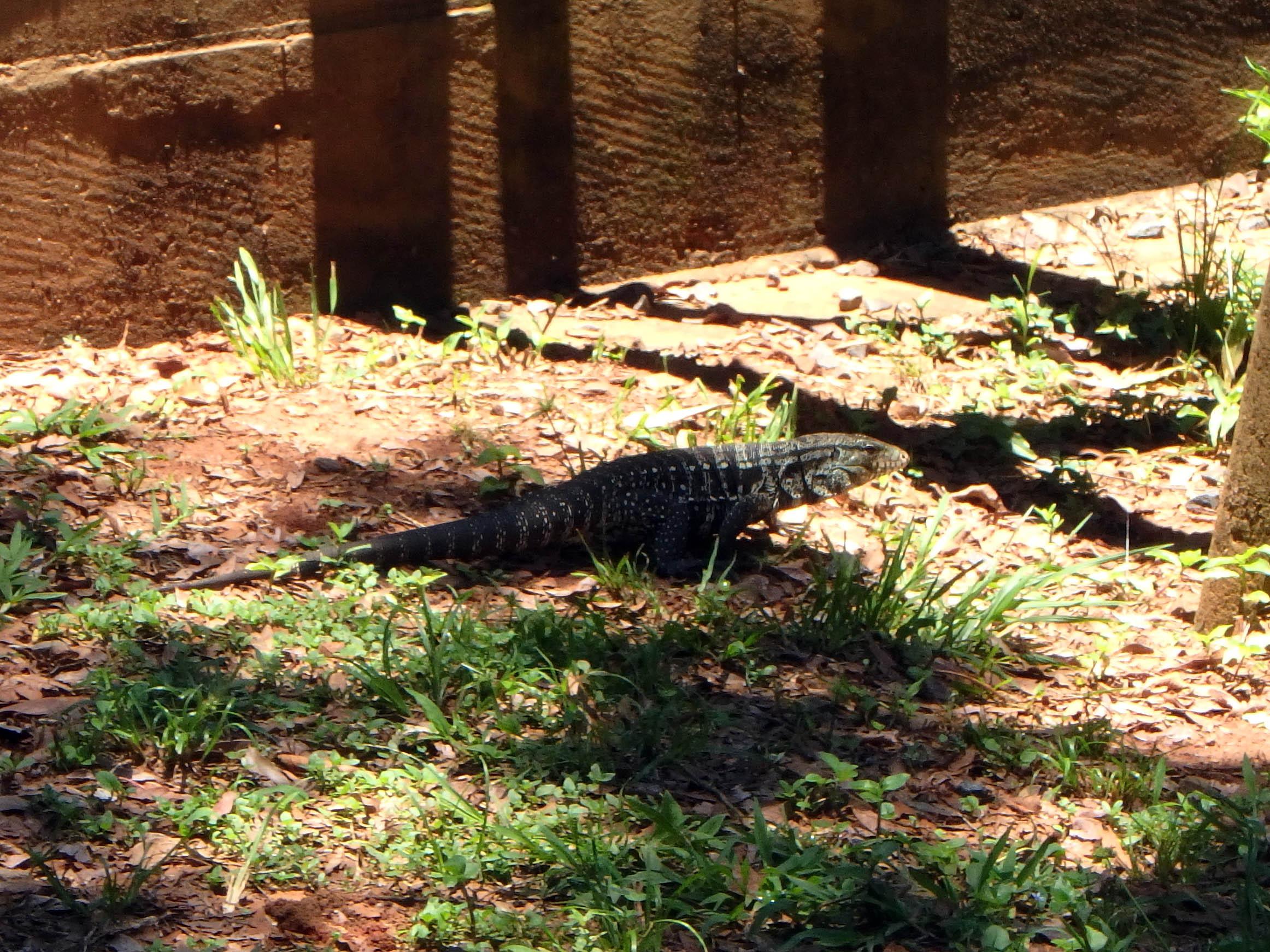 171212_Iguazu Cataratas72