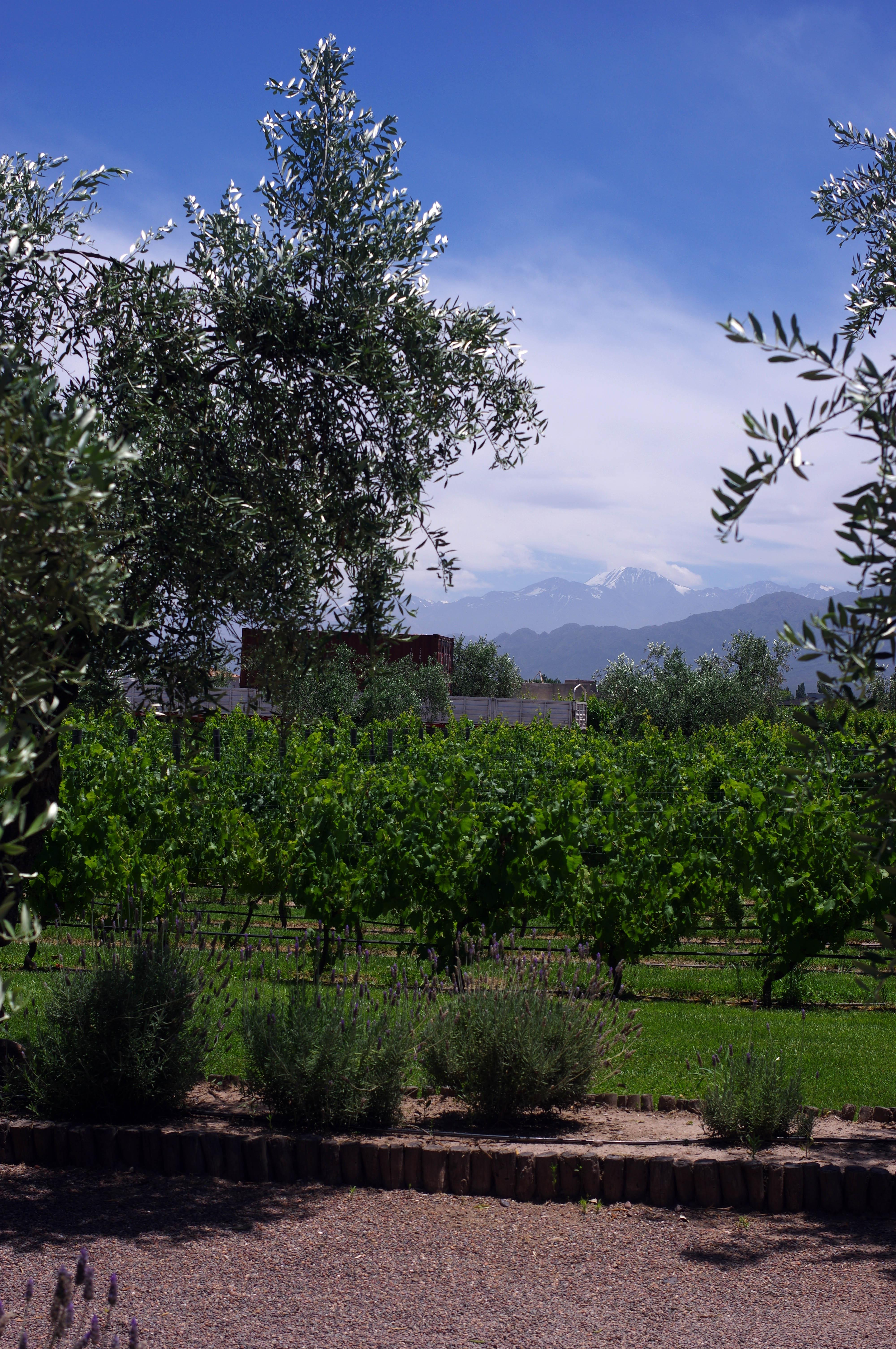 171218_Mendoza-WineTour49