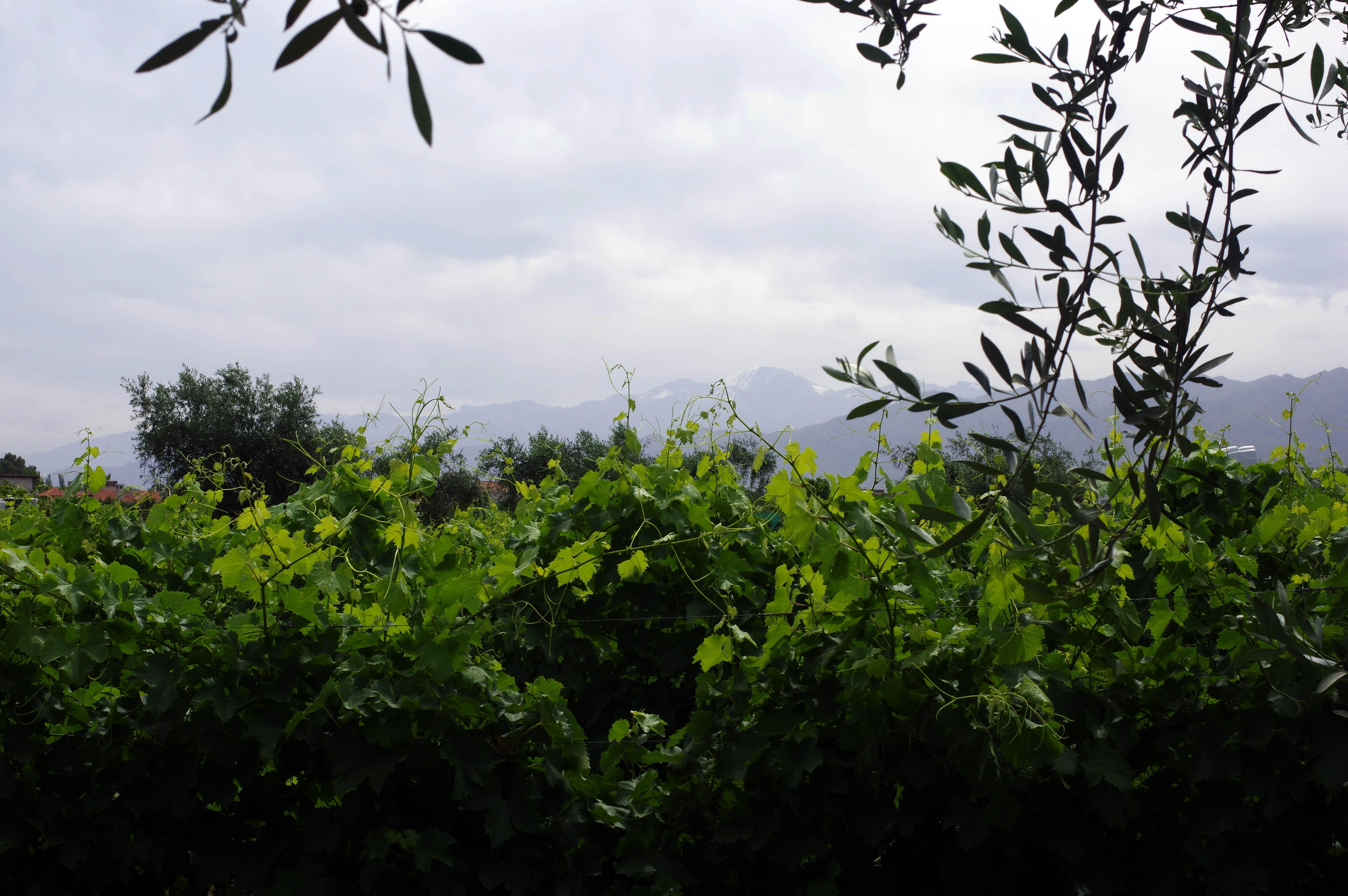 171218_Mendoza-WineTour68