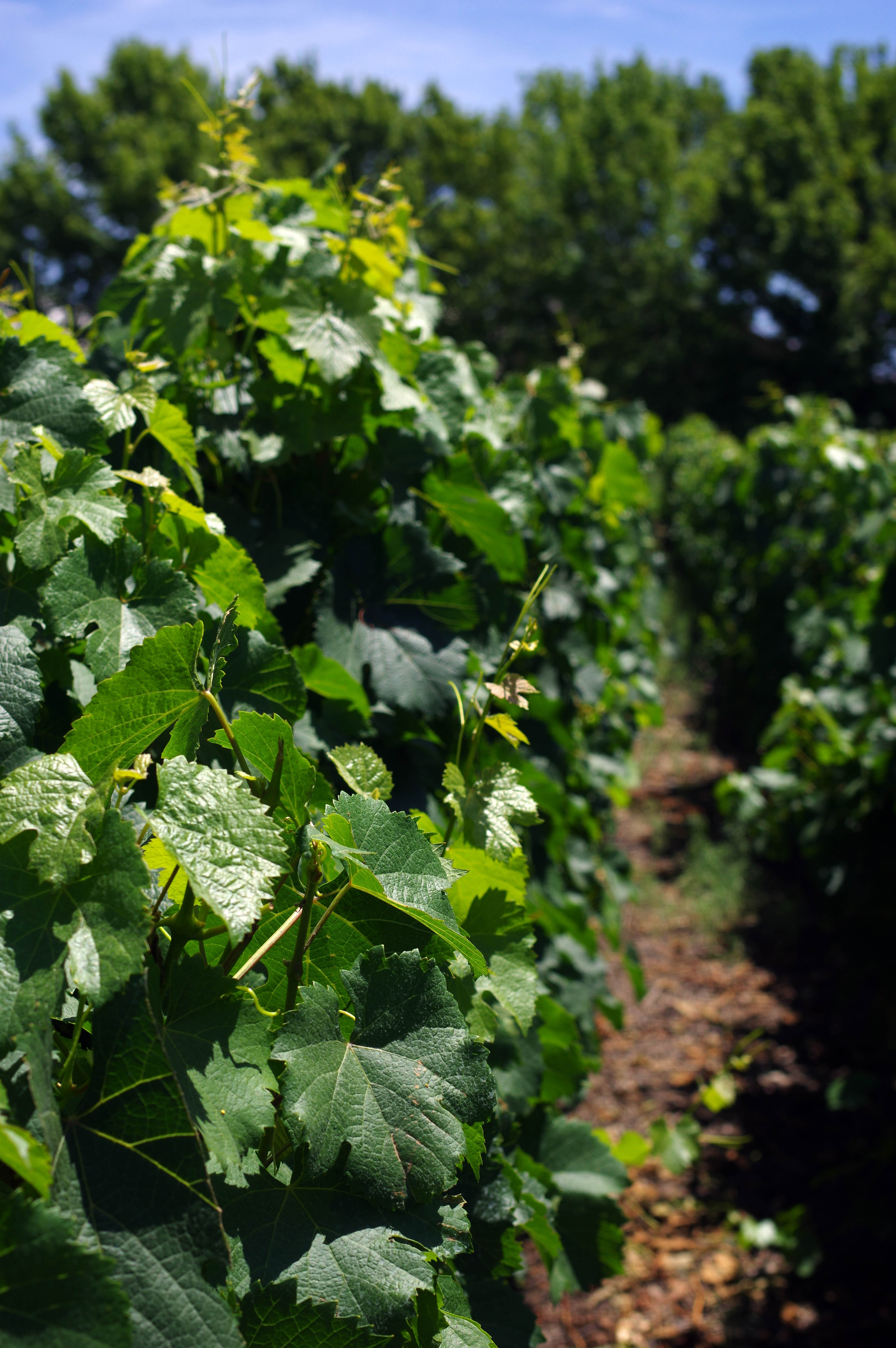 171218_Mendoza-WineTour08