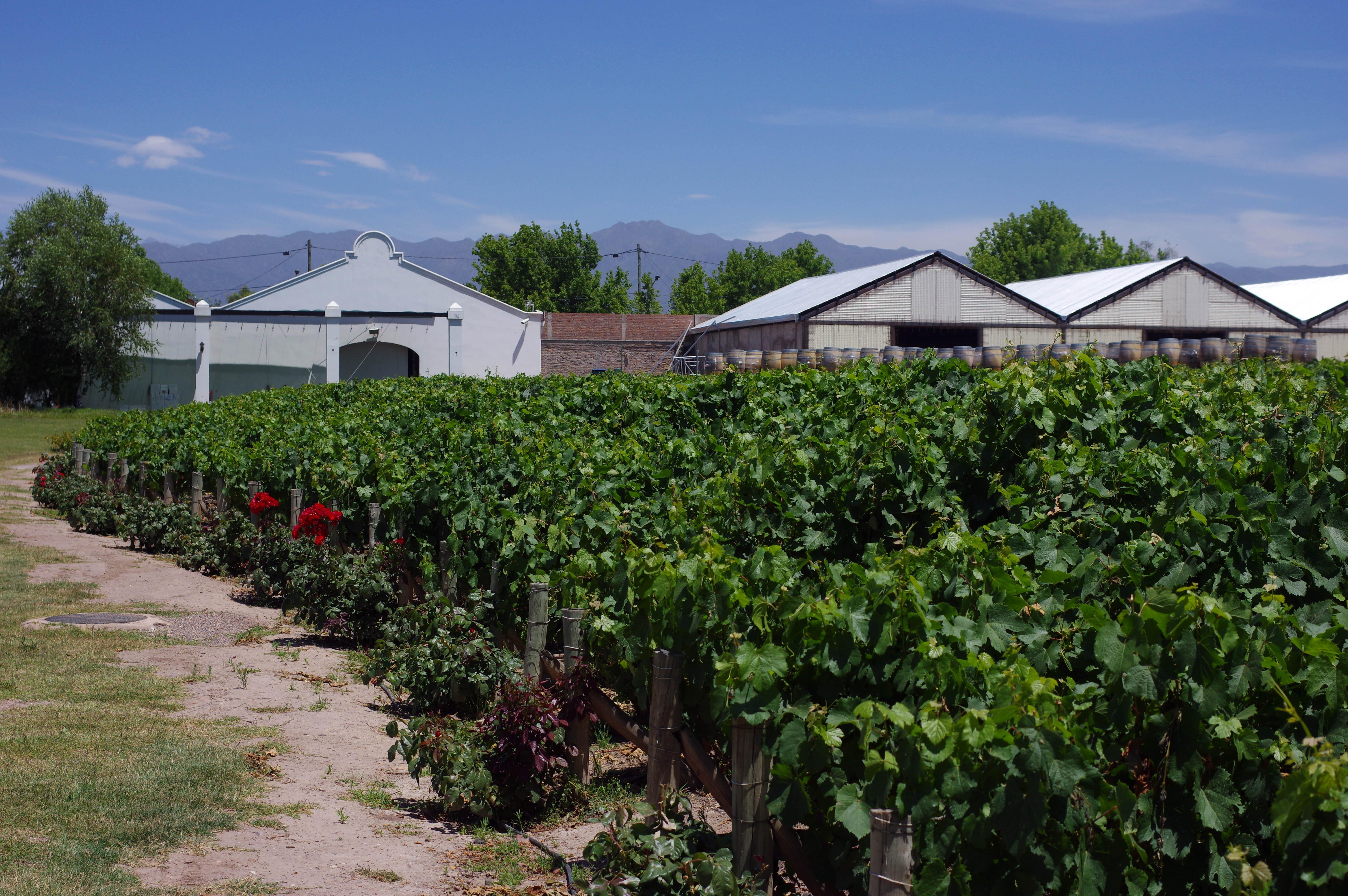 171218_Mendoza-WineTour09