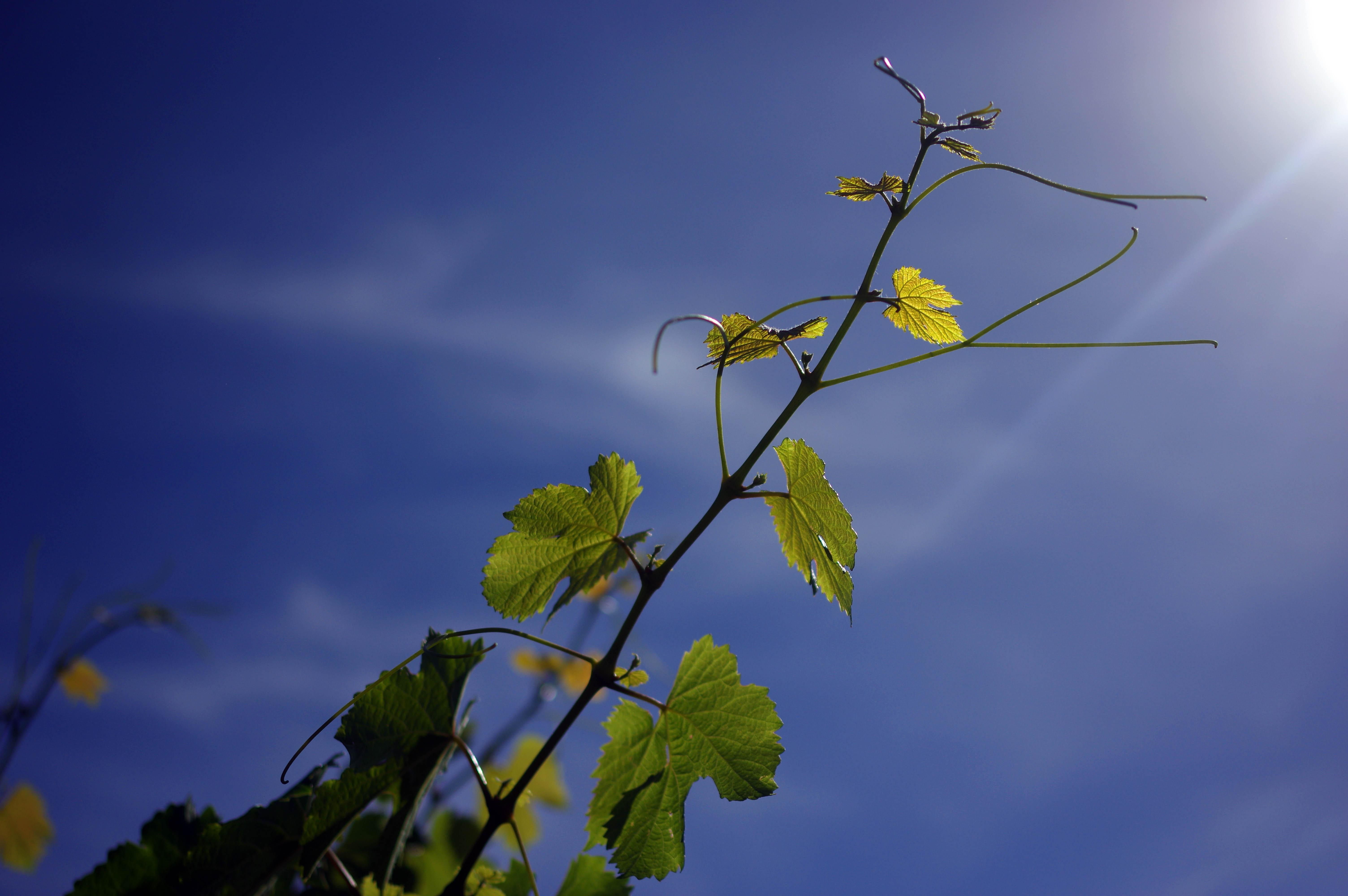 171218_Mendoza-WineTour40