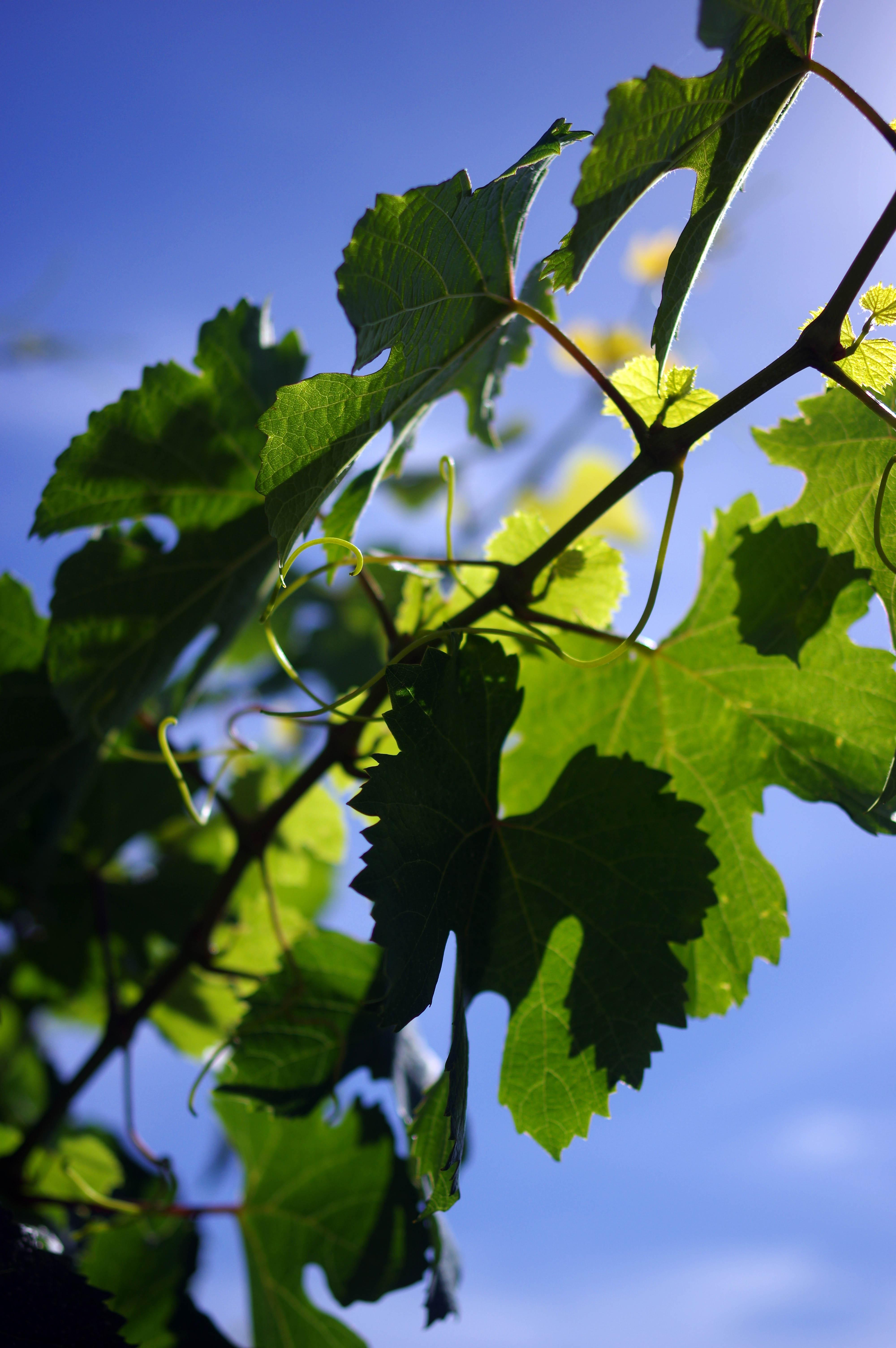 171218_Mendoza-WineTour41