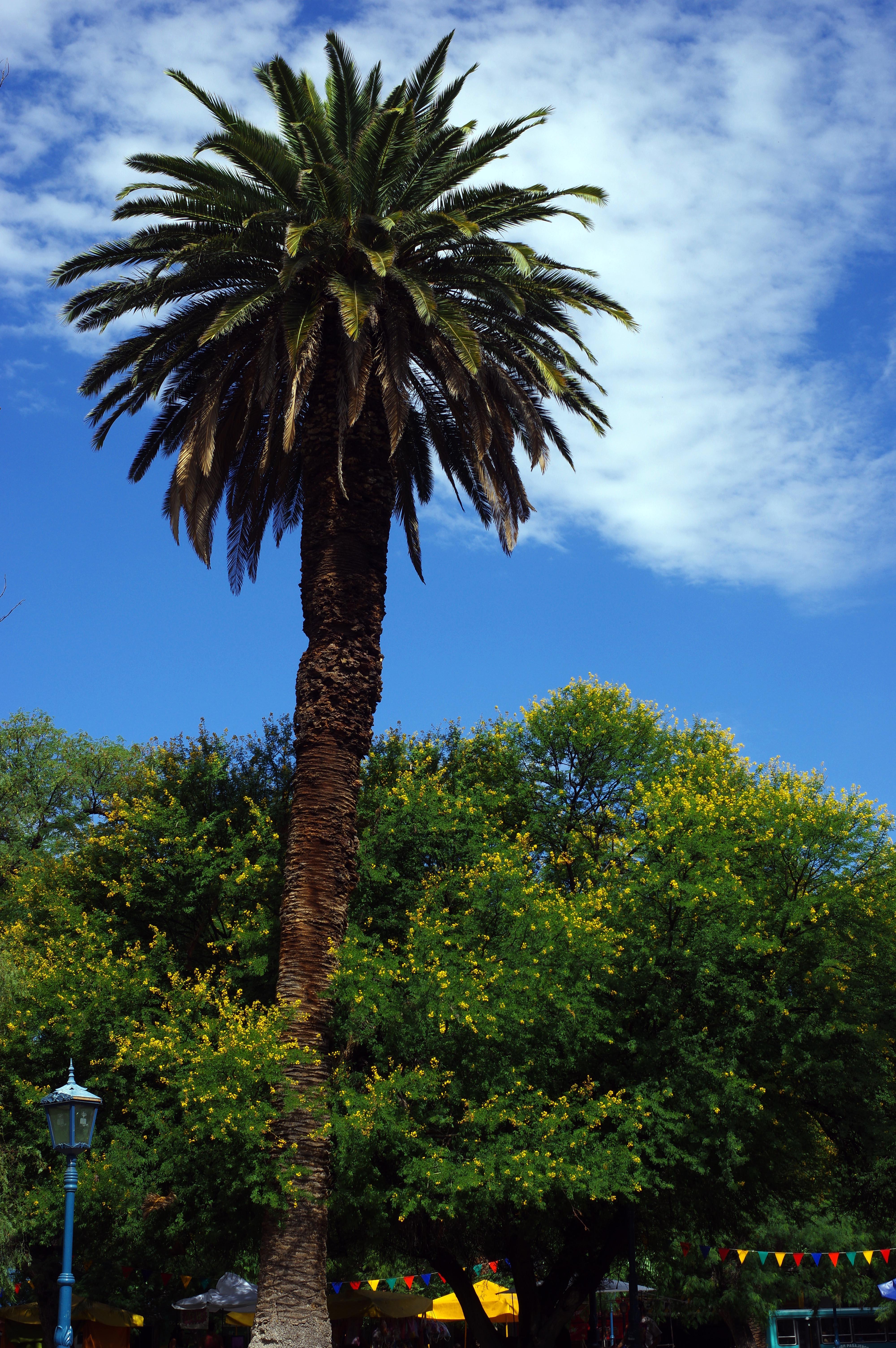 171226_Mendoza-CerrodelArco56