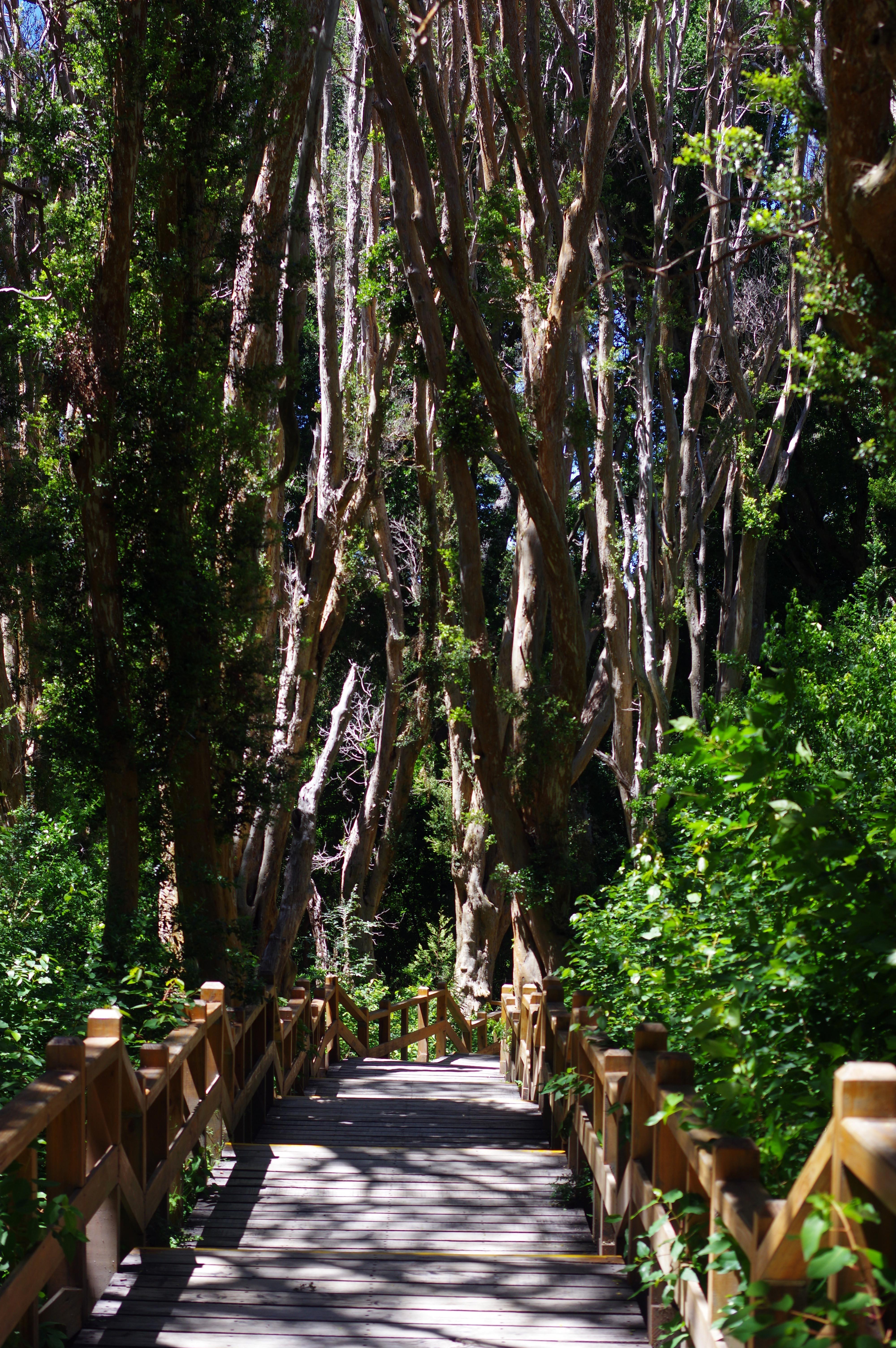 171229_VLA-Parque Arrayanes32