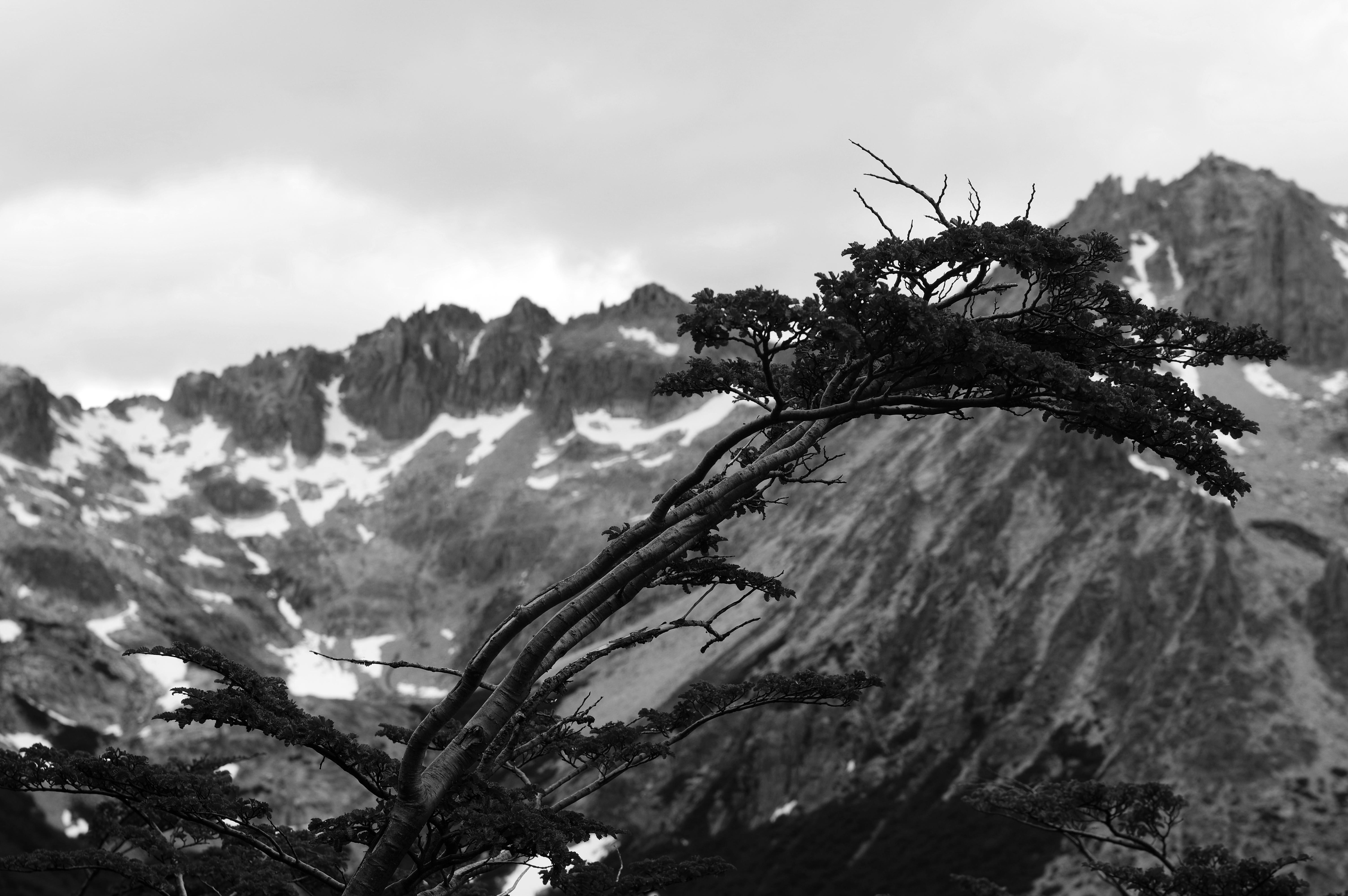 180101_Bariloche-Cerro Catedral41-b&w