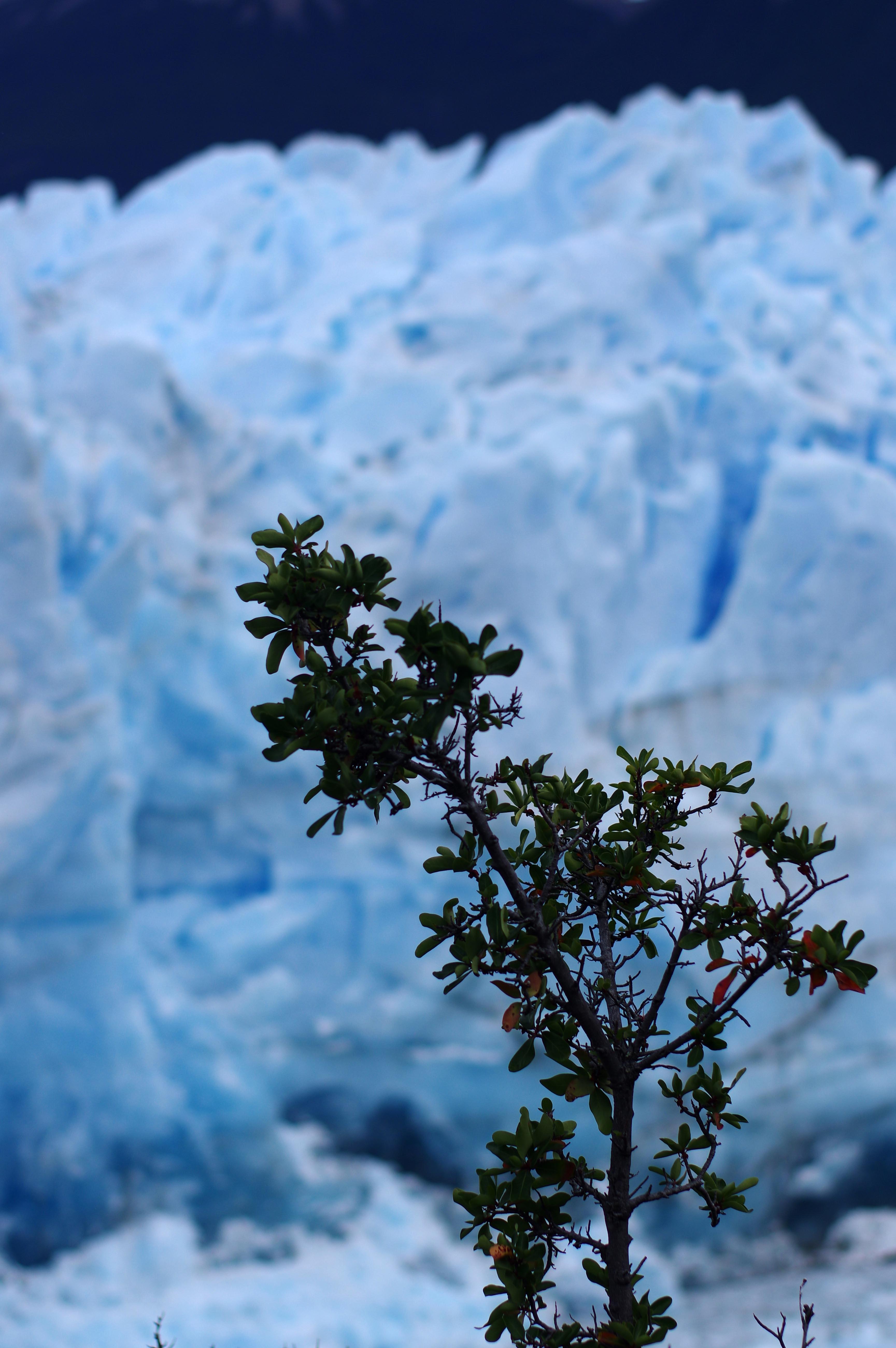 180115_El Calafate-Perito Moreno76