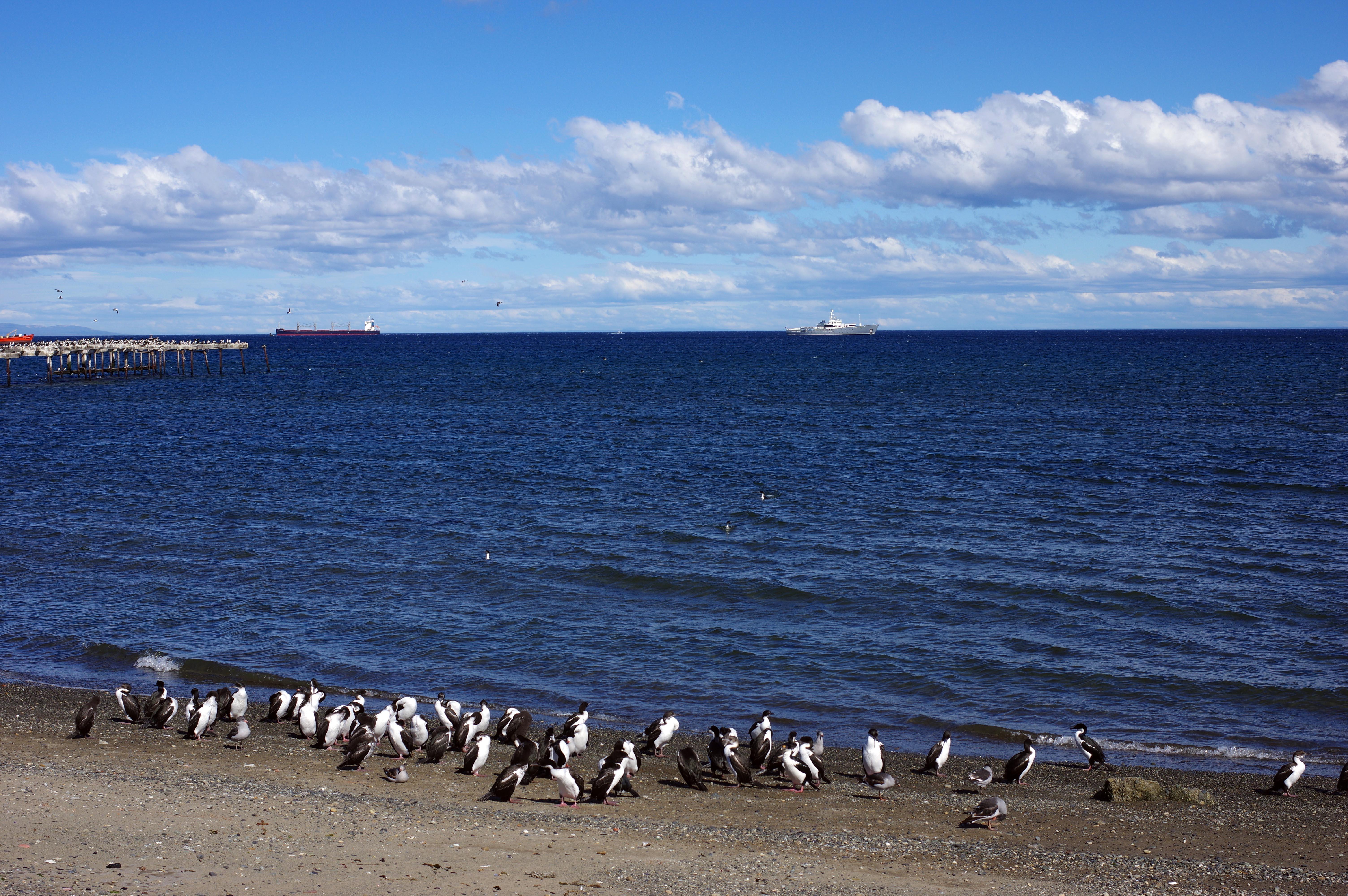 180119_Punta Arenas67