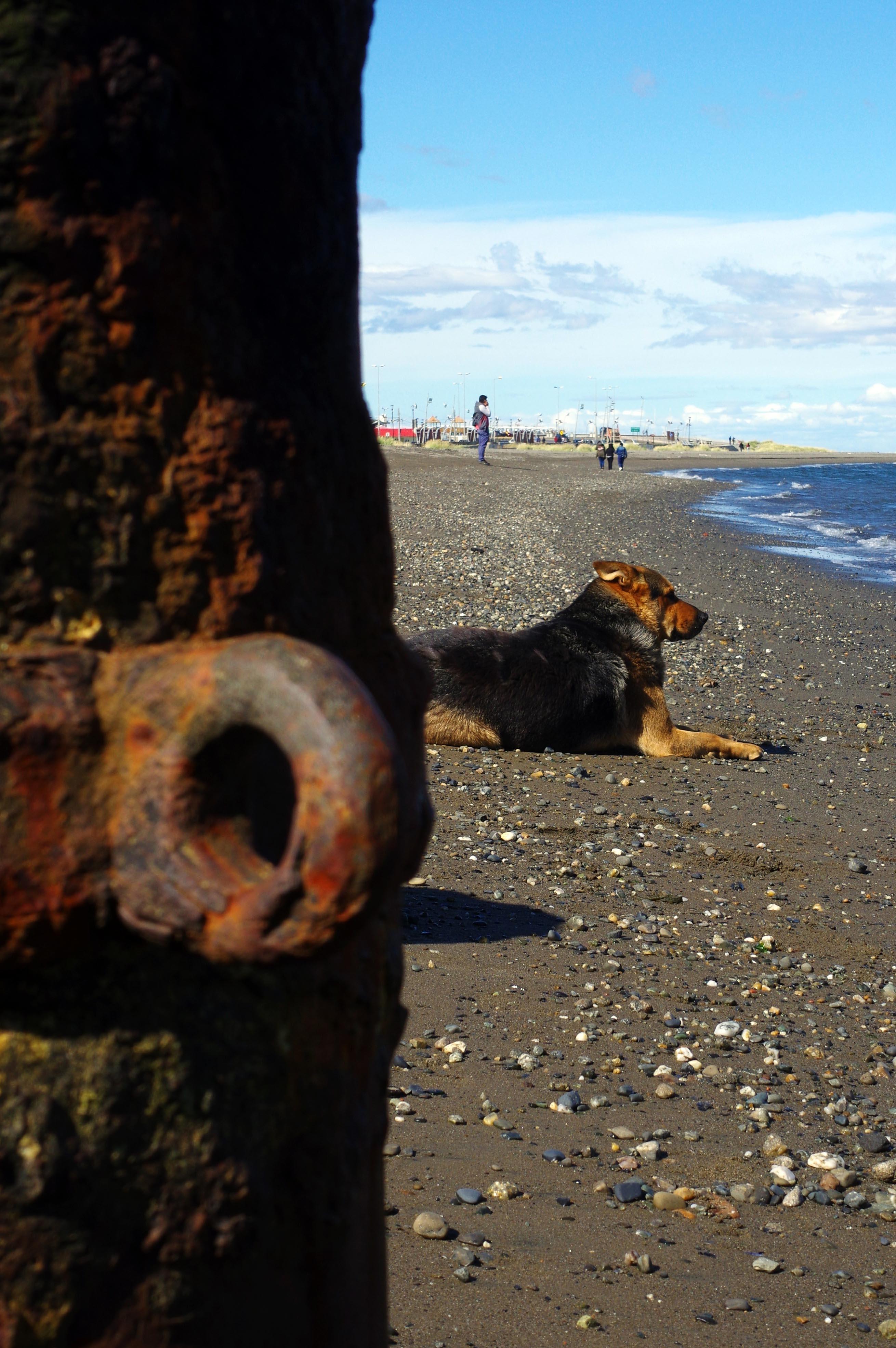 180119_Punta Arenas78