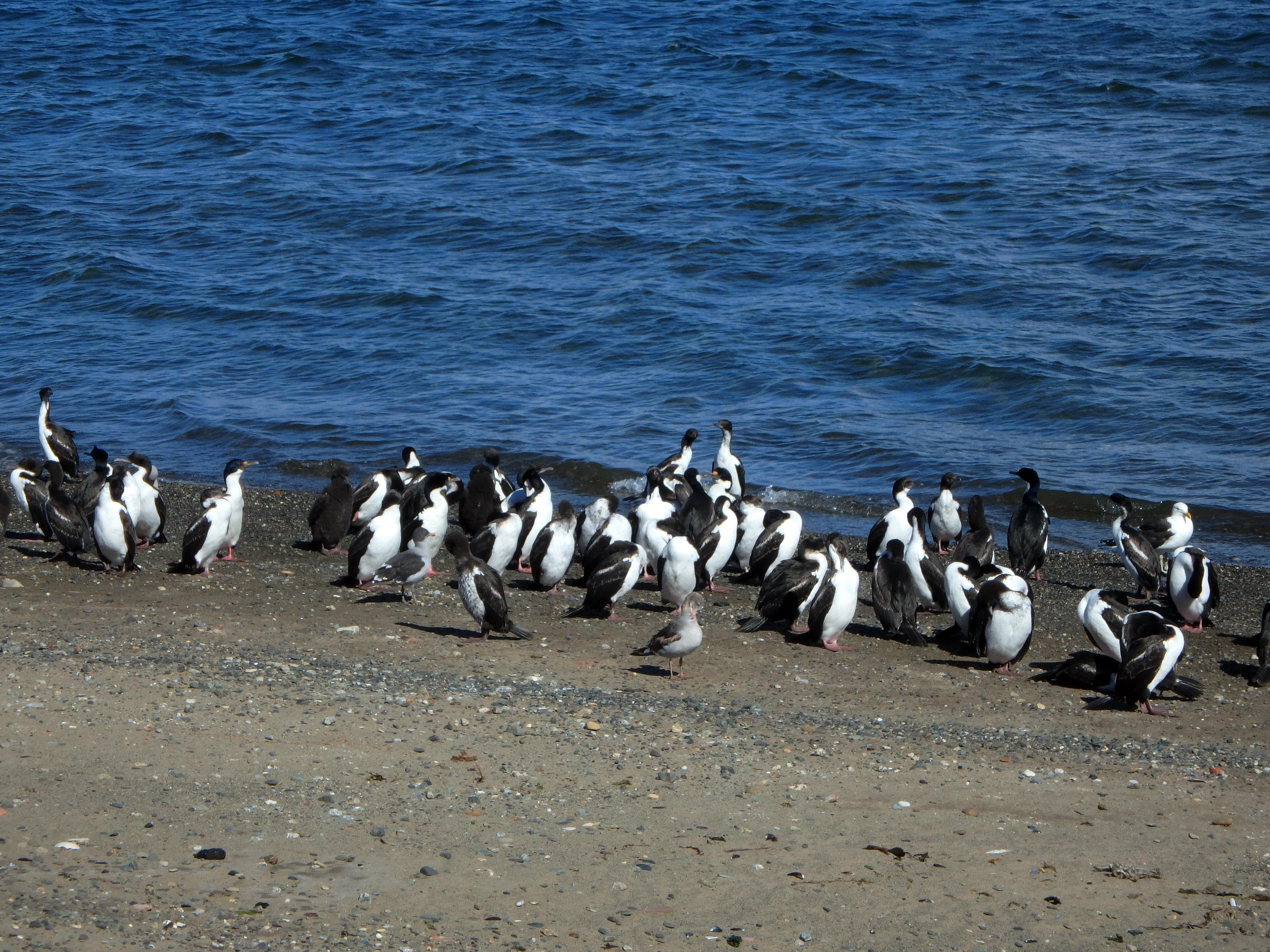 180119_Punta Arenas68