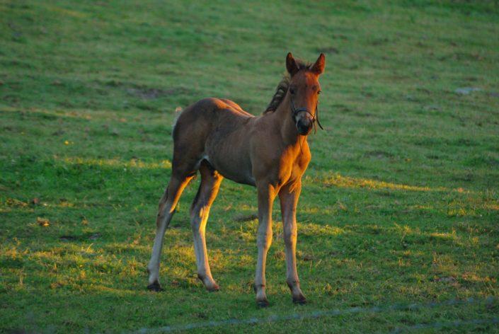 Horse - Irlande du Nord - Juillet 2011 © Mllepix
