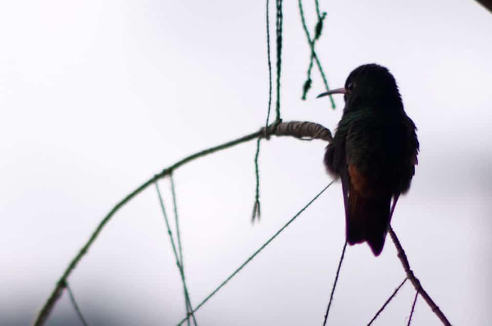 Mindo, des tyroliennes et des colibris