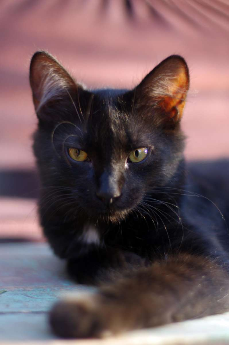 Cats - Alpatauca © Mllepix
