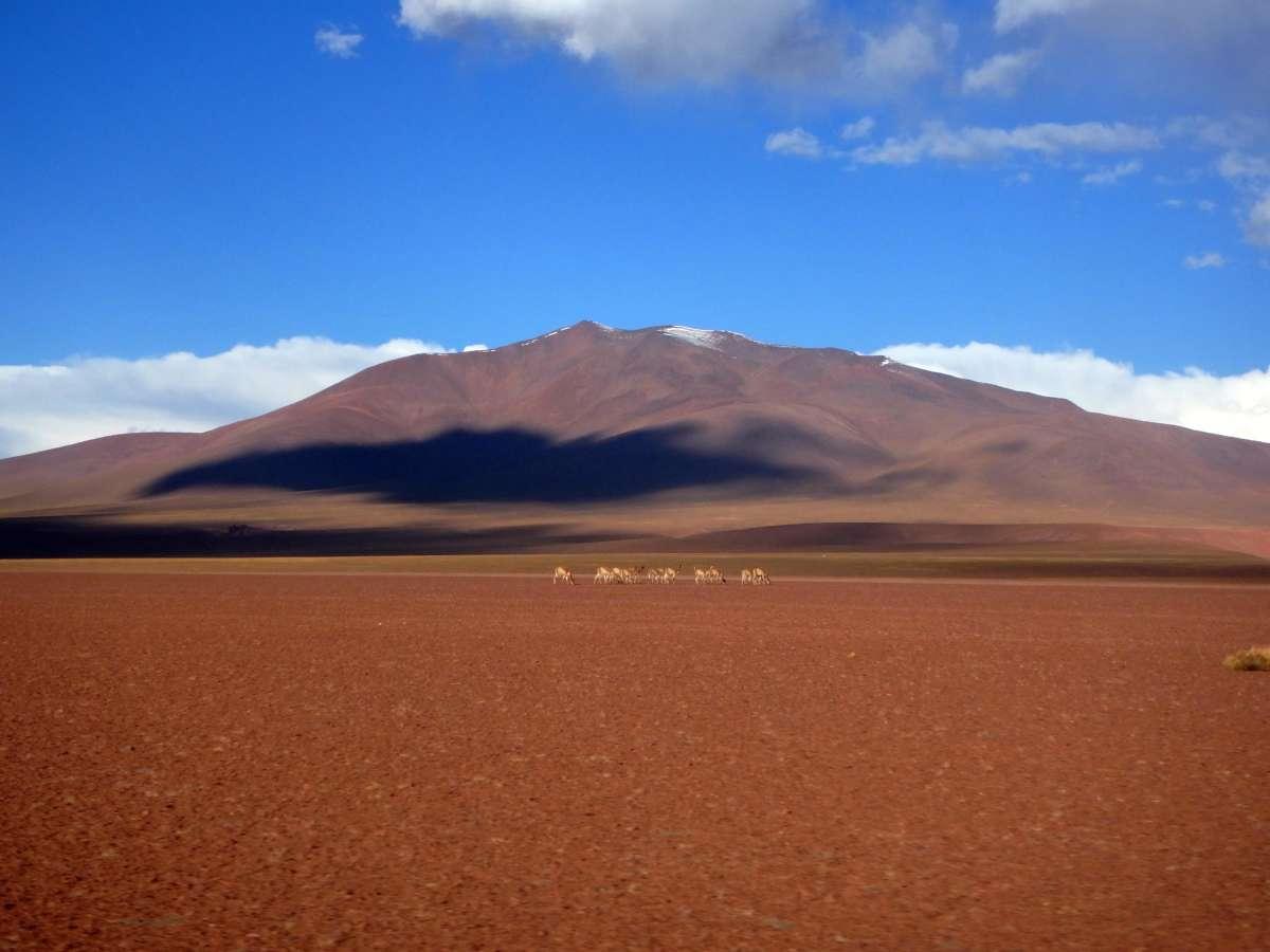 Laguna Colorada - Sud Lipez - Bolivia © Mllepix