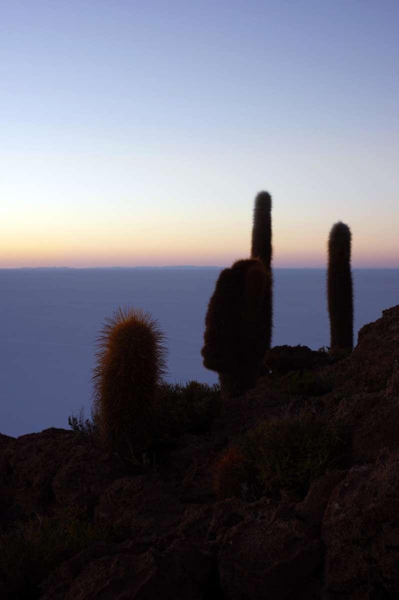 Sunrise - Isla Incahuasi - Uyuni Salt Flats © Mllepix