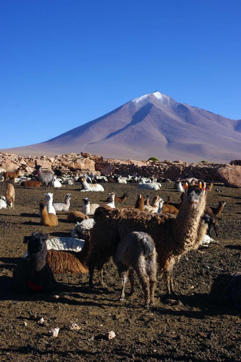 Sud Lipez - Bolivia © Mllepix