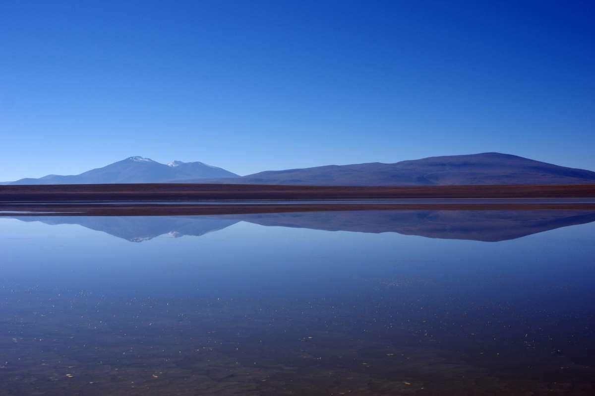 Flamingos - Sud Lipez - Bolivia © Mllepix