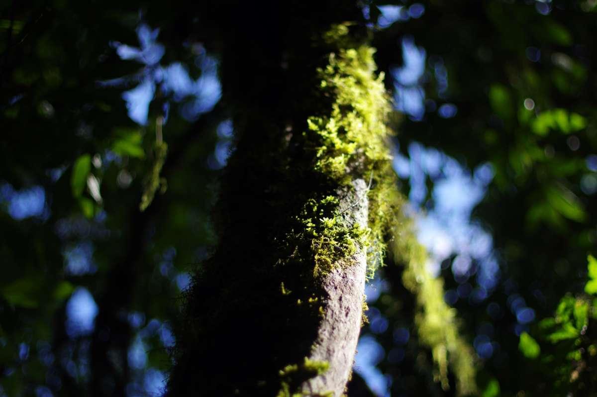 Parque Maicha - Villa Tunari © Mllepix