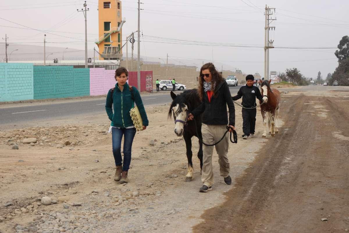 Equinotherapia - Ser Tacna - Peru © Mllepix