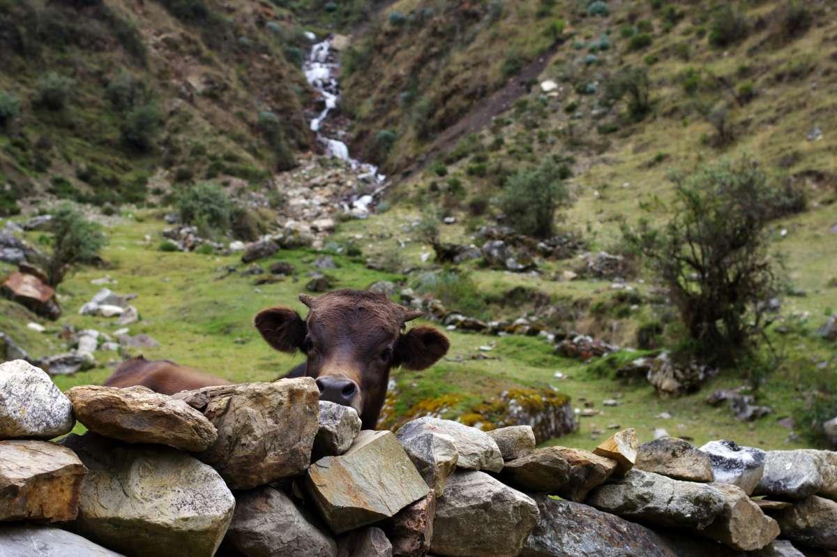 Choquequirao trekking - Peru © Mllepix