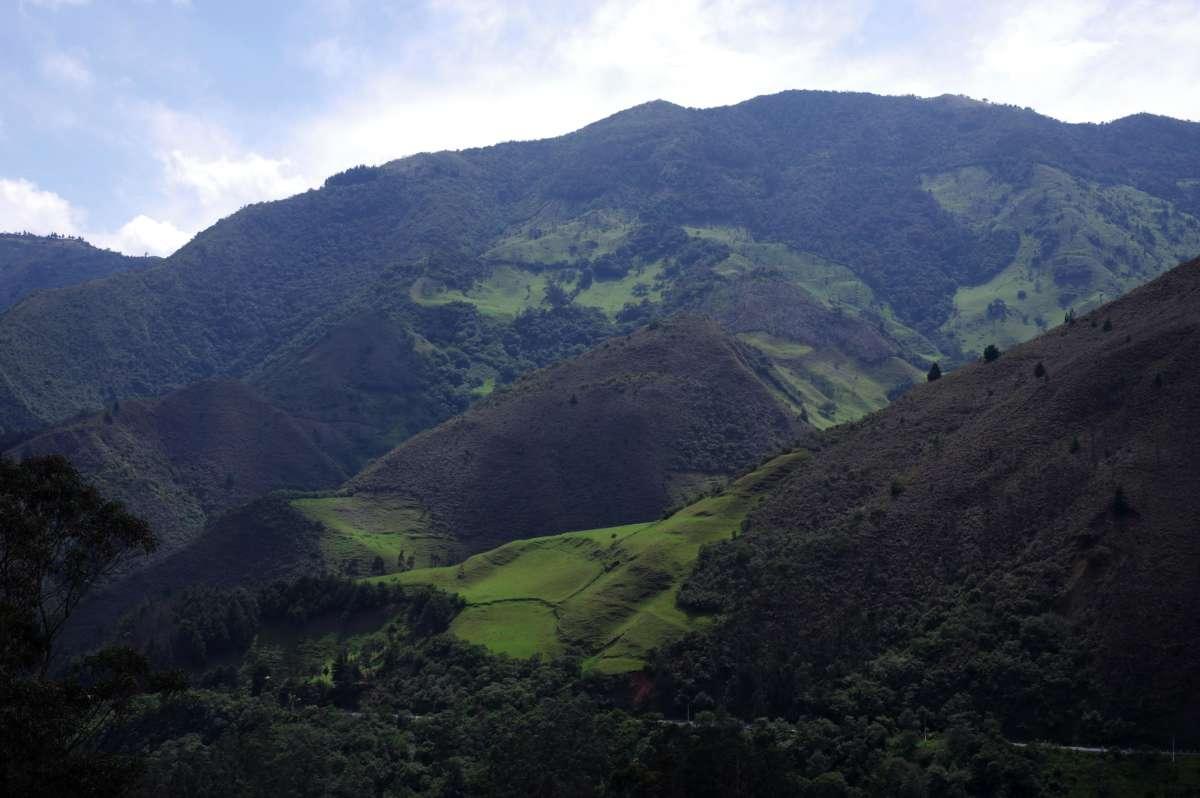 Podocarpus National Park - Ecuador © Mllepix