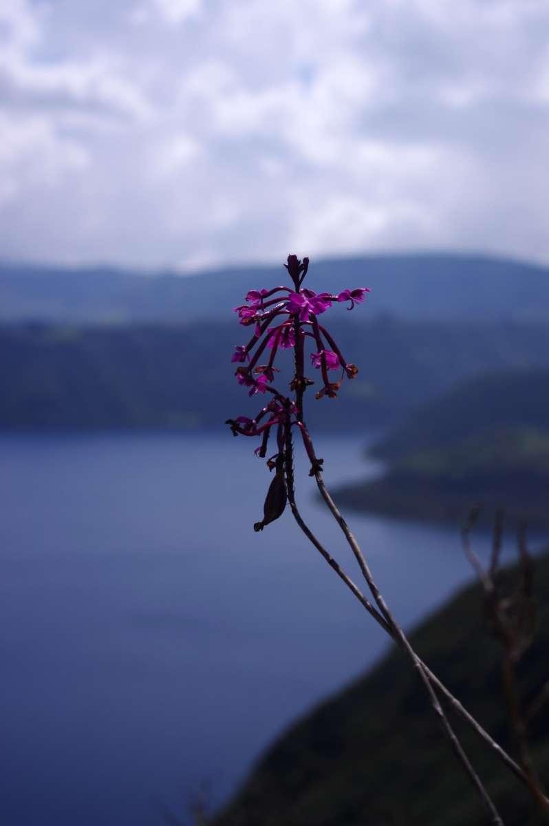 Laguna Cuicocha - Otavalo - Ecuador © Mllepix